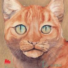 Biblioburro: Io sono gatto